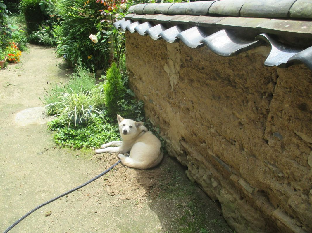 <span></span><div>Biri-chan the dog of Masako</div>