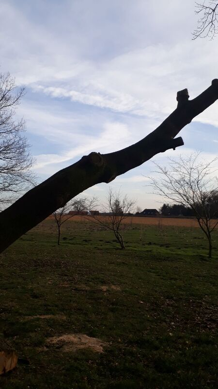 <span></span><div>thank you dear Oak - we will give life to your beautiful wood !</div>