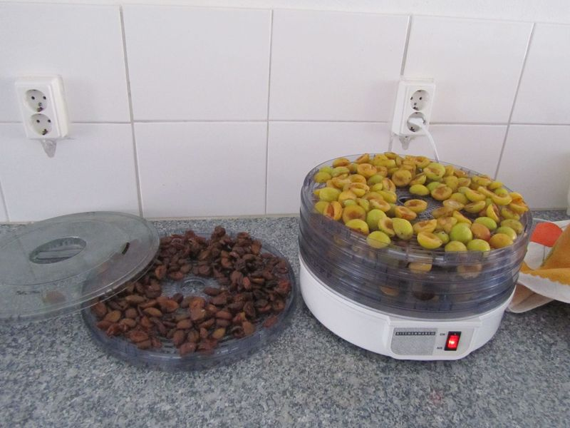 drying fruit  - <span>hopefully to last until sesshin :)</span>