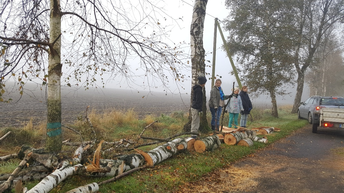 <span></span><div>Many hands help up clean the trees fallen in the recent storm</div>
