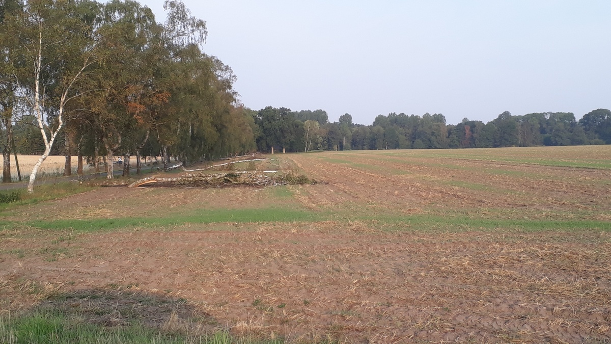 <span></span><div>The farm lands are empty...</div>