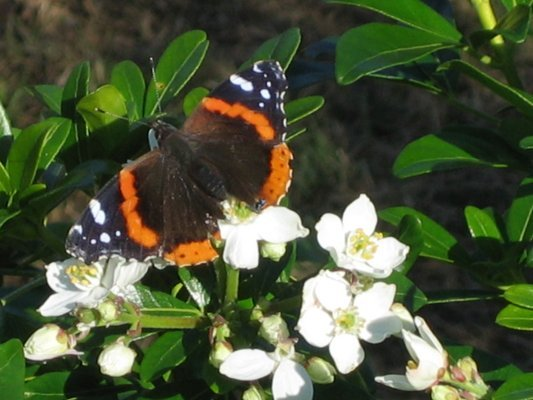 Butterfly on flowers  <span></span>