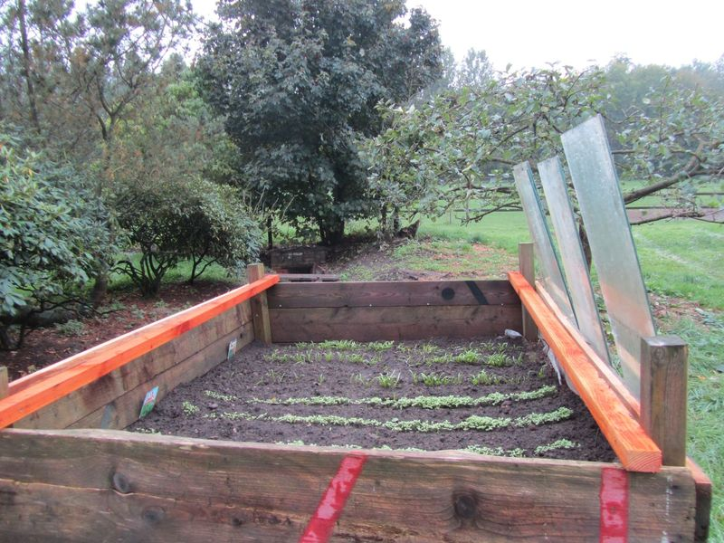 winter vegetables - <span>with glass protection donated by Willi</span>