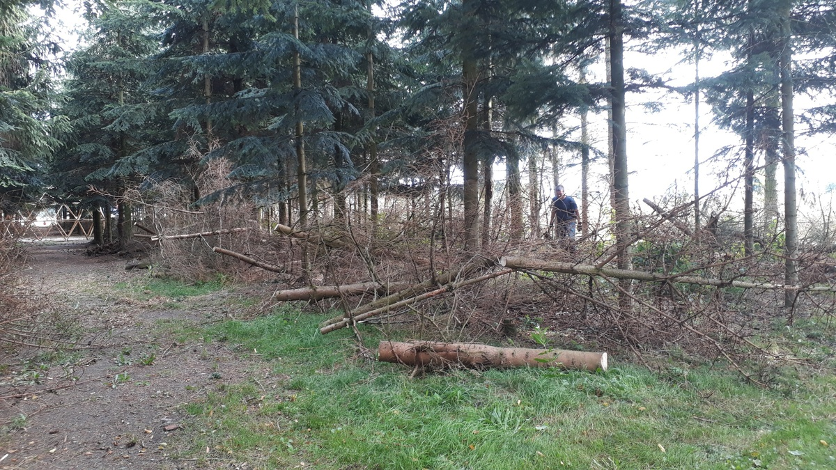 <span></span><div>Guus meanwhile is cutting dead trees in the forest</div>