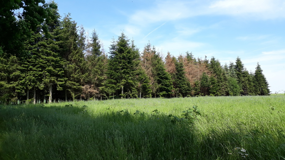 <span></span><div>... many trees need to be cut since they did not make it through</div>