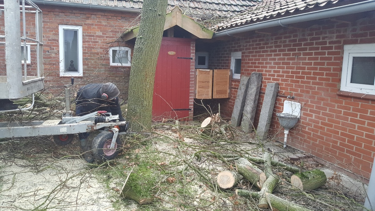 <span></span><div>Basti cutting a huge oak which is too close to the building</div>