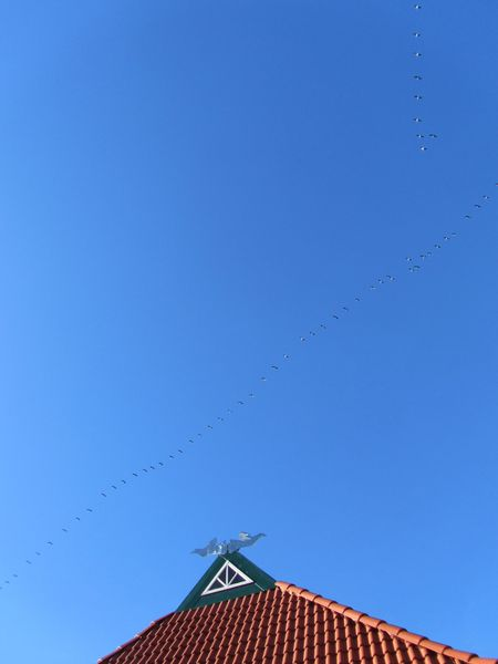 geese are heading south  <span></span>